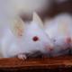 老いた細胞が若返る?免疫機能向上は美容と健康の秘訣