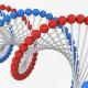 エイジングケアは『長寿遺伝子』から!